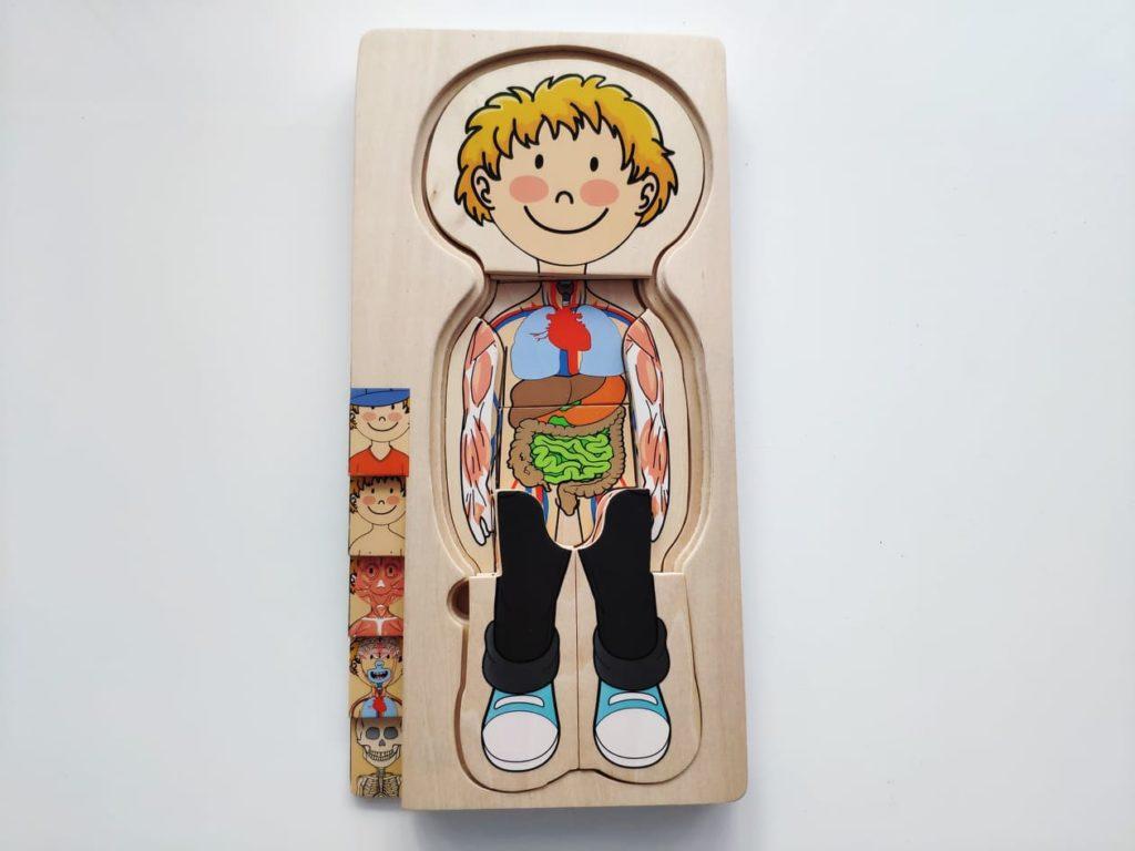 Ciało człowieka drewniana układanka.